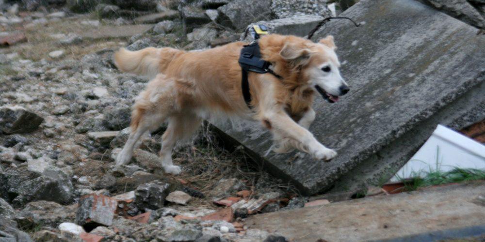 I nostri cani: FENDER
